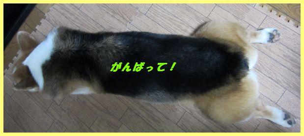 b0198549_21315953.jpg