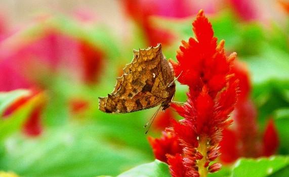和歌山県植物公園緑花センター _b0093754_0221424.jpg