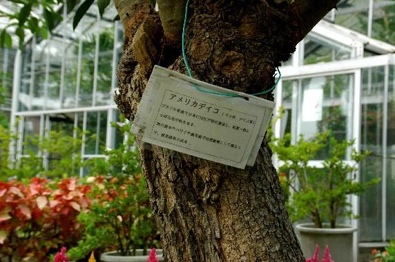 和歌山県植物公園緑花センター _b0093754_23495523.jpg