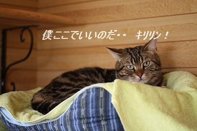 c0187403_1648336.jpg