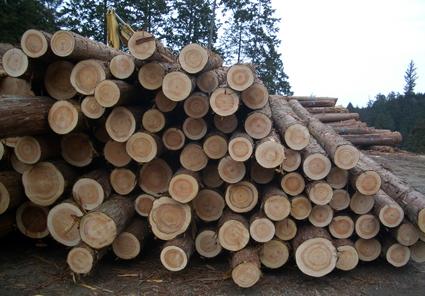【イベント】材木屋さん見学を行います_a0148909_11285642.jpg