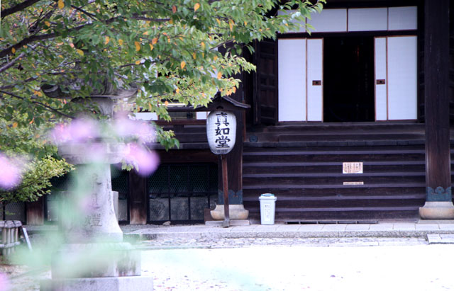 真如堂の萩_e0048413_1746795.jpg