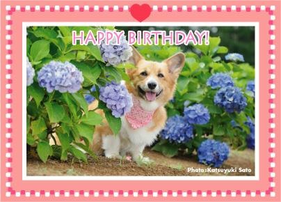 みかんちゃん、お誕生日おめでとう♪_d0102523_1164423.jpg