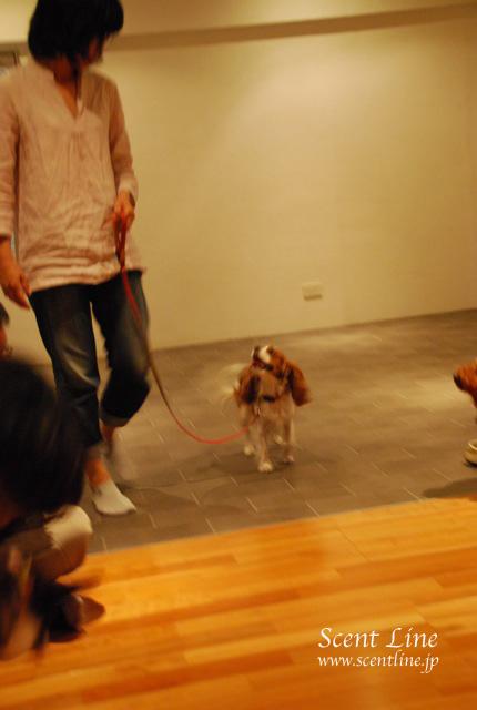 「自分で出来る!愛犬の為の整体教室」vol.2の模様の続き_c0099133_6534764.jpg