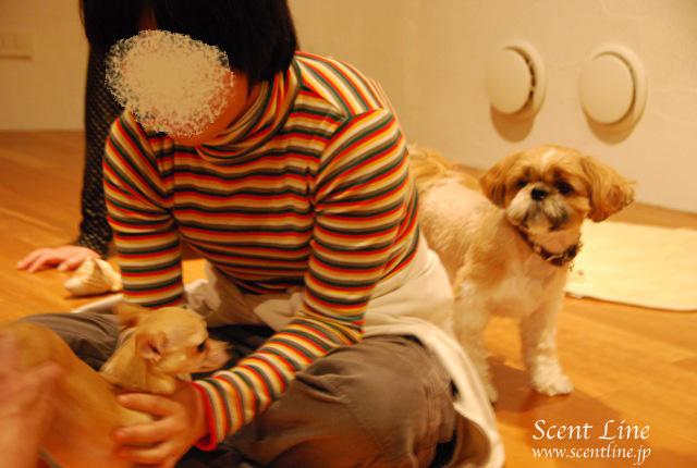 「自分で出来る!愛犬の為の整体教室」vol.2の模様の続き_c0099133_6543556.jpg