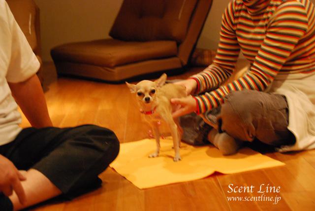 「自分で出来る!愛犬の為の整体教室」vol.2の模様の続き_c0099133_6545366.jpg