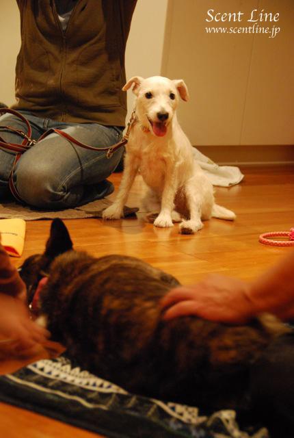 「自分で出来る!愛犬の為の整体教室」vol.2の模様の続き_c0099133_6554025.jpg