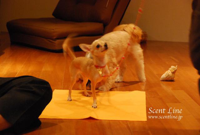 「自分で出来る!愛犬の為の整体教室」vol.2の模様の続き_c0099133_7401185.jpg