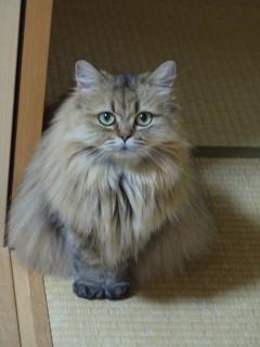 猫のお友だち チャロちゃん 雪ちゃん トラちゃん編。_a0143140_23255410.jpg