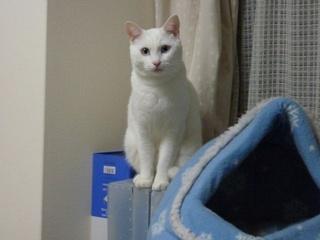 猫のお友だち チャロちゃん 雪ちゃん トラちゃん編。_a0143140_23262358.jpg
