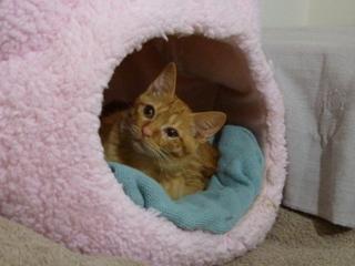猫のお友だち チャロちゃん 雪ちゃん トラちゃん編。_a0143140_23264738.jpg