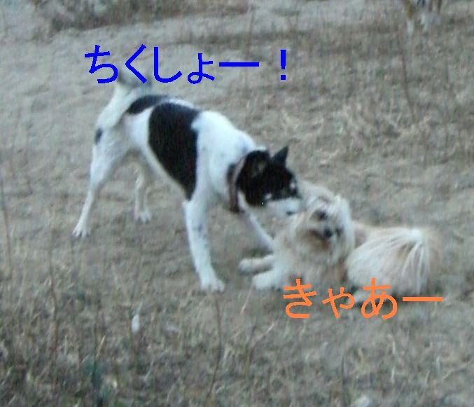 f0053952_1353623.jpg