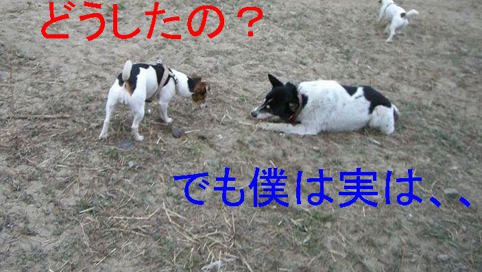 f0053952_13551229.jpg