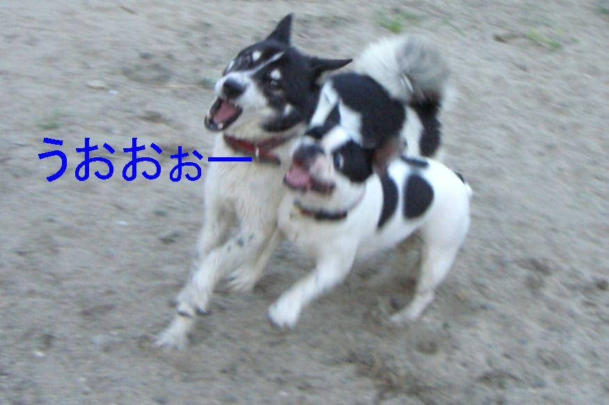 f0053952_1432882.jpg
