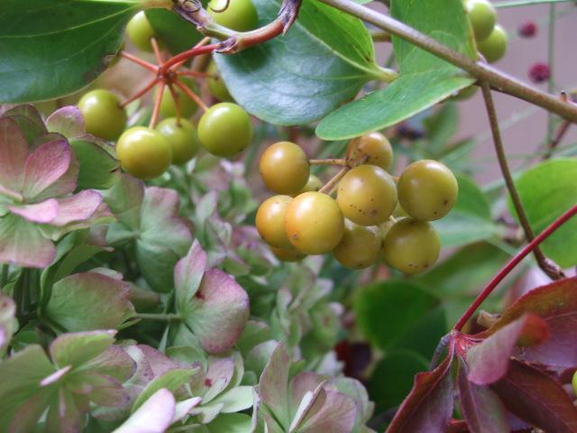 オークリーフ(秋色紫陽花と紅葉と吾亦紅のアレンジメント)_f0049672_17445782.jpg