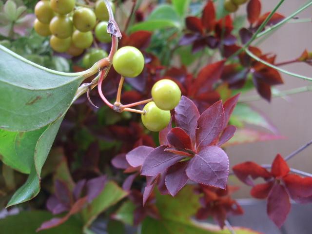 オークリーフ(秋色紫陽花と紅葉と吾亦紅のアレンジメント)_f0049672_1746515.jpg