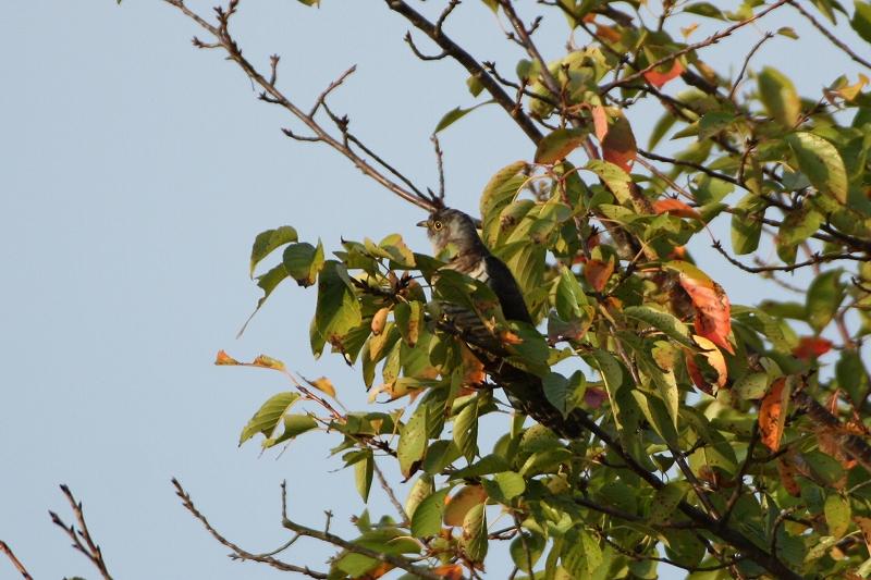 鳥たちに人気の木_e0046474_19525160.jpg