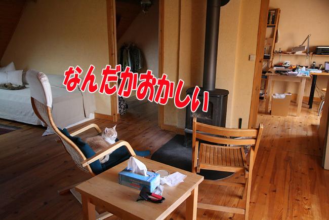 f0068385_5333.jpg