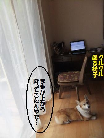 d0104705_97028.jpg