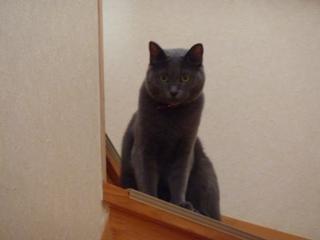 猫のお友だち ロッシーちゃん編。_a0143140_22553843.jpg
