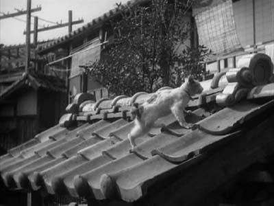 成瀬巳喜男監督『めし』(東宝映画、1951年) その2  _f0147840_061110.jpg