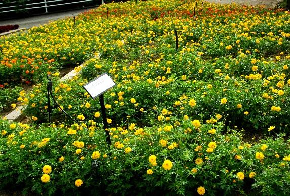 和歌山県植物公園緑花センター _b0093754_23441078.jpg