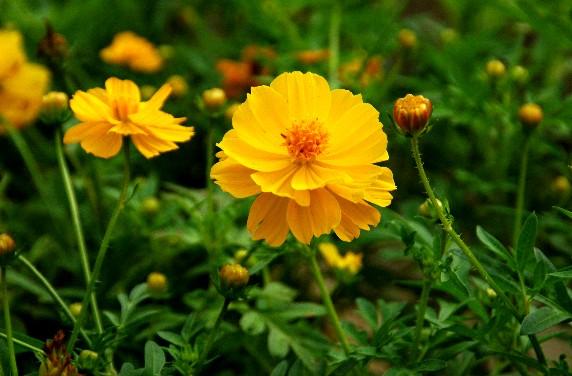 和歌山県植物公園緑花センター _b0093754_23442468.jpg
