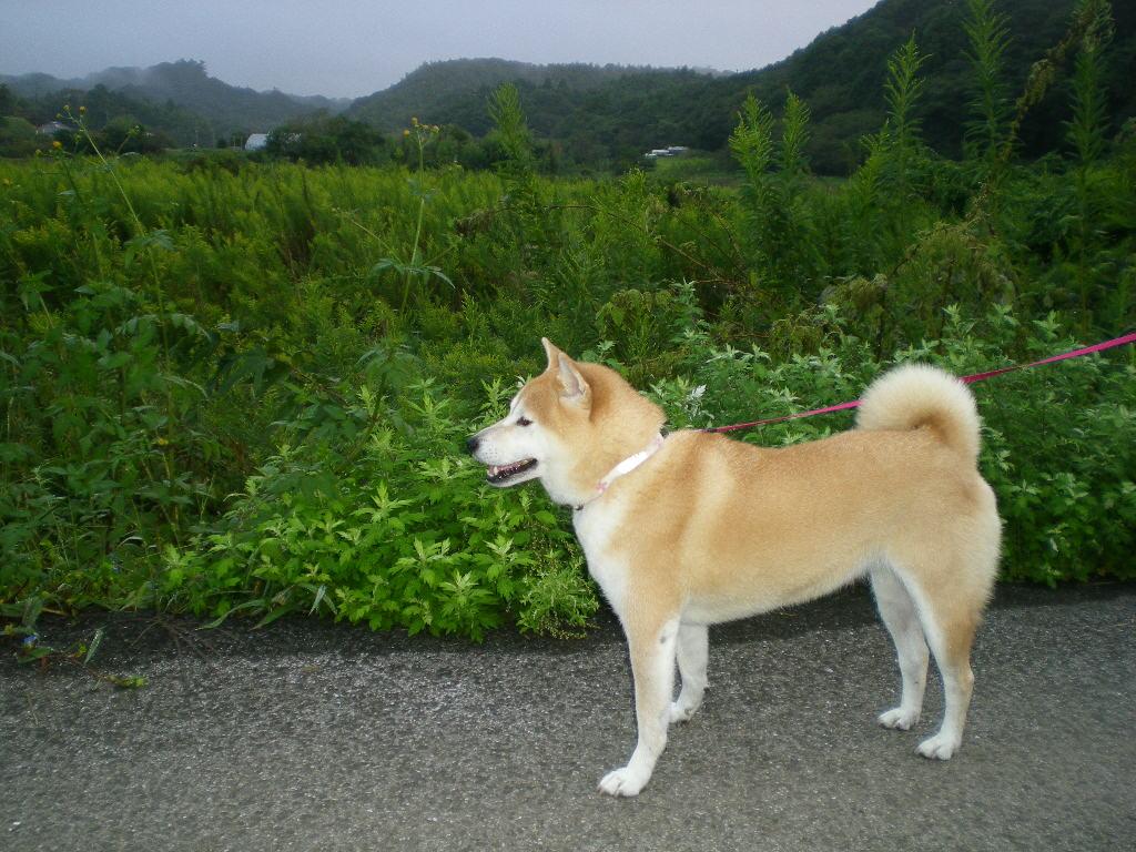 2010年10月5日(火)秋さかり!_f0060461_10281895.jpg
