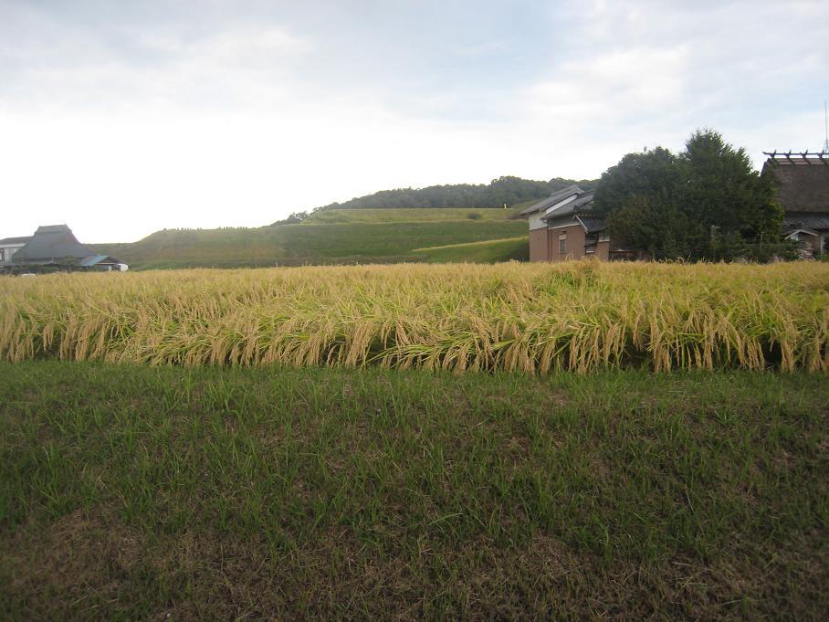 収穫の秋です。_f0205367_21493340.jpg