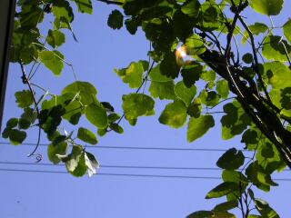 秋の空を眺めながら_c0102699_916513.jpg