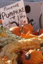 秋の深まってきたニューヨークの青空市場の様子_b0007805_064722.jpg