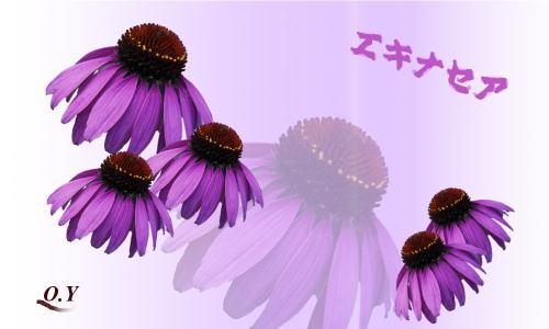 d0155321_108325.jpg