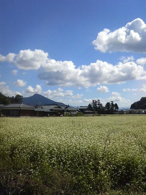 上太田町_f0067122_12551643.jpg