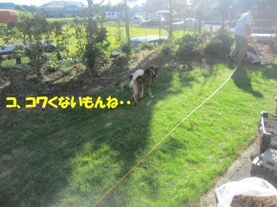 f0143123_19474656.jpg