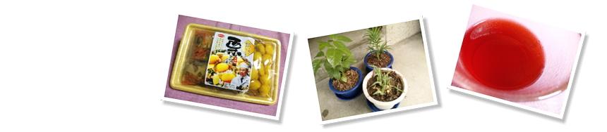 栗ご飯、我が家の植木たち、誕生日プレゼントの飲料
