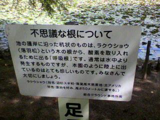 お散歩♪_d0004447_14372095.jpg