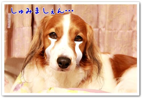 d0013149_1024107.jpg