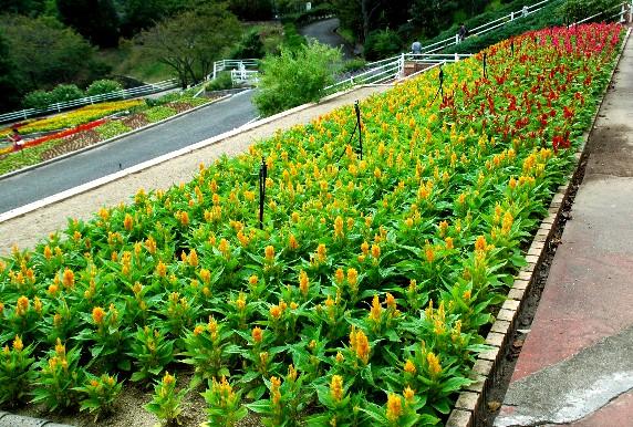 和歌山県植物公園緑花センター _b0093754_23443186.jpg
