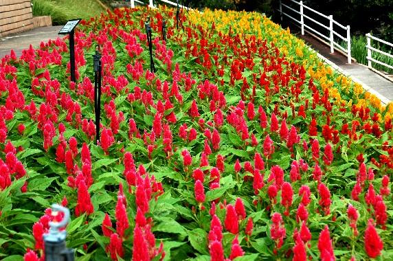 和歌山県植物公園緑花センター _b0093754_23443944.jpg