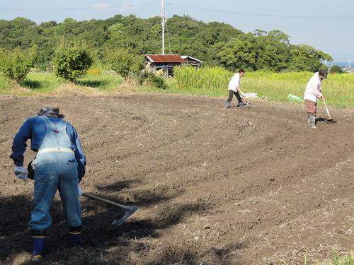 H12年10月 岬高校「山海人プロジェクト:菜の花畑」_c0108460_16164986.jpg