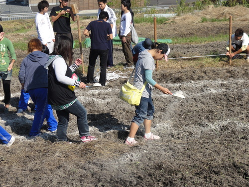 H12年10月 岬高校「山海人プロジェクト:菜の花畑」_c0108460_16192832.jpg