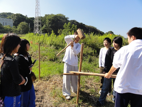 H12年10月 岬高校「山海人プロジェクト:菜の花畑」_c0108460_16201032.jpg