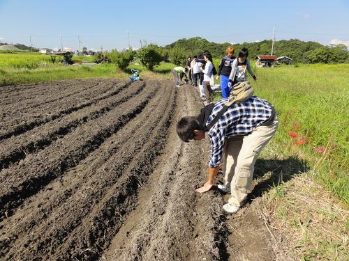 H12年10月 岬高校「山海人プロジェクト:菜の花畑」_c0108460_1621823.jpg