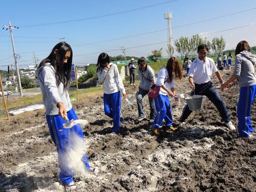 H12年10月 岬高校「山海人プロジェクト:菜の花畑」_c0108460_1622351.jpg