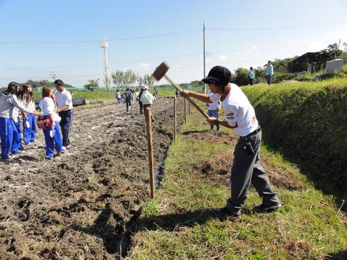 H12年10月 岬高校「山海人プロジェクト:菜の花畑」_c0108460_16244433.jpg