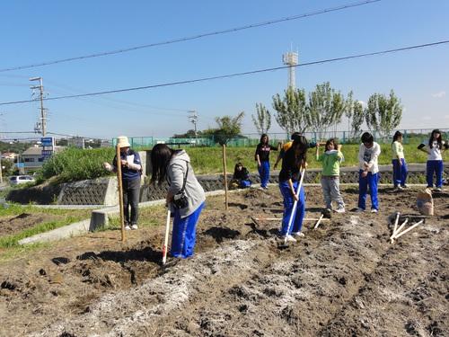 H12年10月 岬高校「山海人プロジェクト:菜の花畑」_c0108460_1626234.jpg