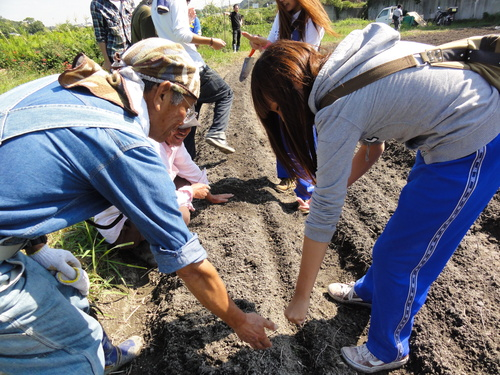 H12年10月 岬高校「山海人プロジェクト:菜の花畑」_c0108460_16291265.jpg