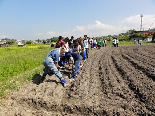 H12年10月 岬高校「山海人プロジェクト:菜の花畑」_c0108460_16363215.jpg