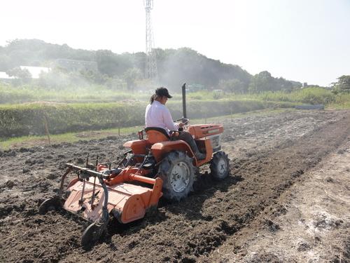 H12年10月 岬高校「山海人プロジェクト:菜の花畑」_c0108460_16371243.jpg