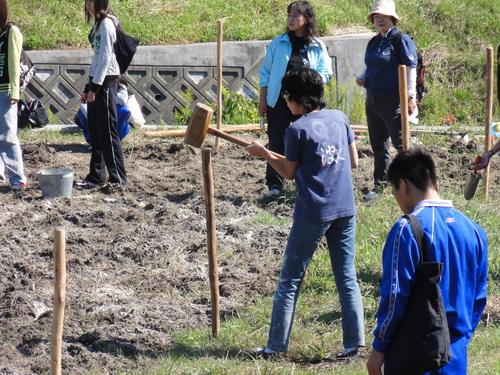 H12年10月 岬高校「山海人プロジェクト:菜の花畑」_c0108460_16402286.jpg
